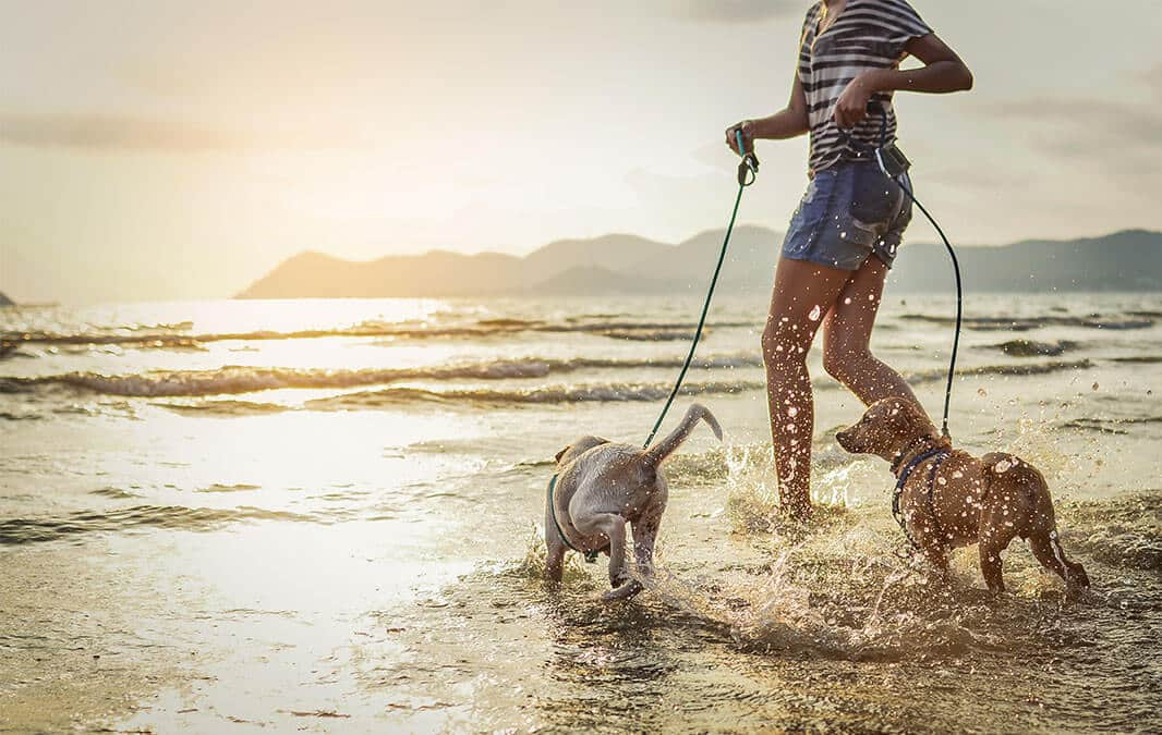 Young woman having fun running on a beach with two dogs